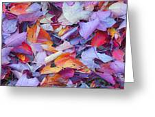 Fall Purples  Greeting Card