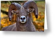 Fall Ram Greeting Card