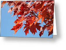 Fall Red Orange Leaves Blue Sky Baslee Troutman Greeting Card