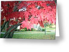 Fall Reds Greeting Card
