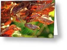 Fall Spiderweb Greeting Card