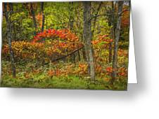 Fall Sumac Trees With Red Leaves In A Michigan Forest During Autumn Greeting Card