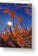 Fall Sun And Trees Greeting Card