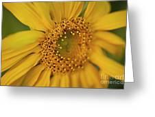 Fall Sunflower Avila, Ca Greeting Card
