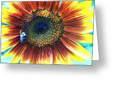 Fall Sunflower Greeting Card