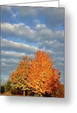 Fall Sunrise On Sugar Maple Along Route 31 Greeting Card