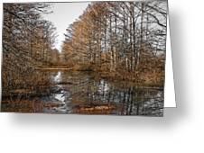 Fall Swamp Greeting Card