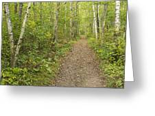 Fall Trail Scene 40 Greeting Card