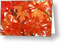 Fall Tree Art Autumn Leaves Red Orange Baslee Troutman Greeting Card
