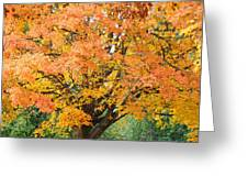 Fall Tree Art Print Autumn Leaves Greeting Card
