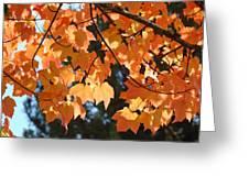 Fall Tree Art Prints Orange Autumn Leaves Baslee Troutman Greeting Card