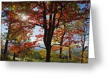 Fall Tree Colors I Greeting Card