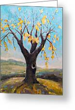 Fall Tree In Virginia Greeting Card by Becky Kim