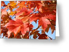 Fall Tree Leaves Art Prints Blue Sky Autumn Baslee Troutman Greeting Card