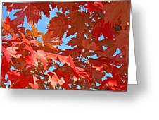 Fall Tree Leaves Red Orange Autumn Leaves Blue Sky Greeting Card