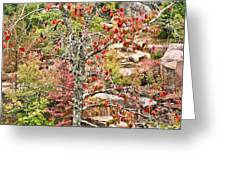 Fall Tree With Intense Colors Greeting Card