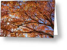 Fall Tree With Star Burst Greeting Card