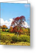 Fall Trees In Country Field Greeting Card