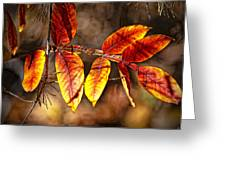 Fall Trees Number One Greeting Card