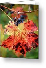 Fall Vine Greeting Card