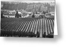 Vineyard In Black And White Greeting Card