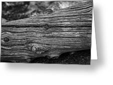 Fallen Black And White Trees And Lines In Nature Greeting Card