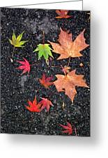 Fallen Leaves 4 Greeting Card