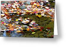 Fallen Leaves Birch River Greeting Card