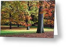 Fallen Leaves II Greeting Card