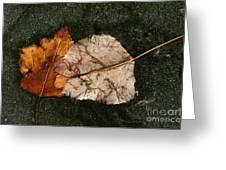Fallen Leaves On Frozen Water Greeting Card