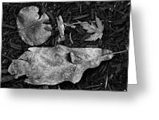 Fallen Leaves Revisited Greeting Card