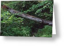Fallen Log Greeting Card