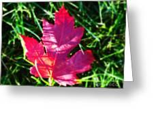 Fallen Maple Leaf Greeting Card