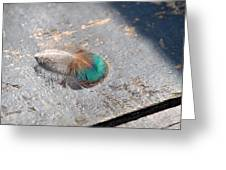 Fallen Peacock Feather Greeting Card