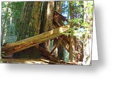 Fallen Redwood Trees Forest Greeting Card