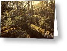 Fallen Tree In Foliage Greeting Card