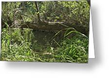 Fallen Tree In Peters Canyon Greeting Card
