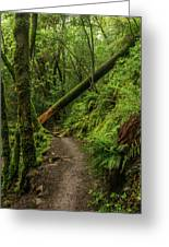 Fallen Tree On The Trail Greeting Card