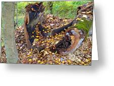 Fallen Tree With Leaves And Moss Greeting Card by Terry  Wiley