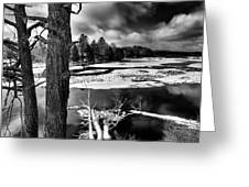 Fallen Trees In The Moose River Greeting Card