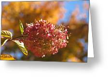 Falling For Hydrangea Greeting Card