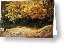 Bass Lake Falling Leaves Greeting Card