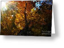 Falling Light Greeting Card