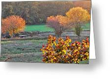 A Fall Day.  Greeting Card