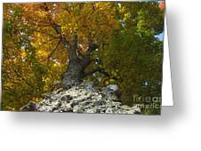 Falling Tree Greeting Card