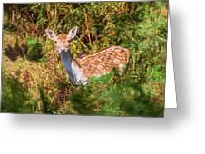 Fallow Deer 2 Greeting Card