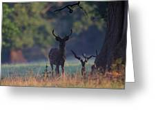 Fallow Deer Stag Greeting Card
