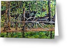 Falls Lake In July Greeting Card