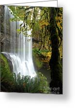 Falls Though The Trees Greeting Card