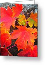 Falltime ...  Greeting Card